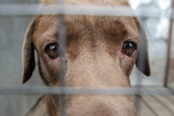 грустная собака в клетке