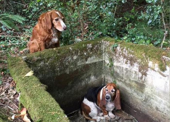 Собака спасает друга из ловушки