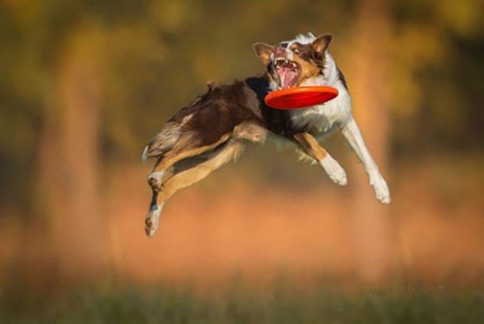 собака в полете