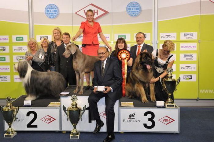 Объявление победителя на выставке собак