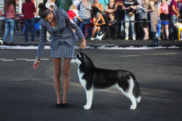 Собака на выставке с хозяином