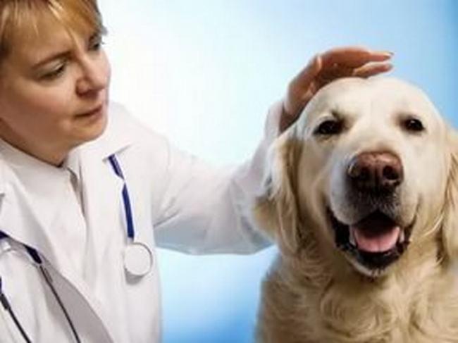 Виды глазных заболеваний у собак