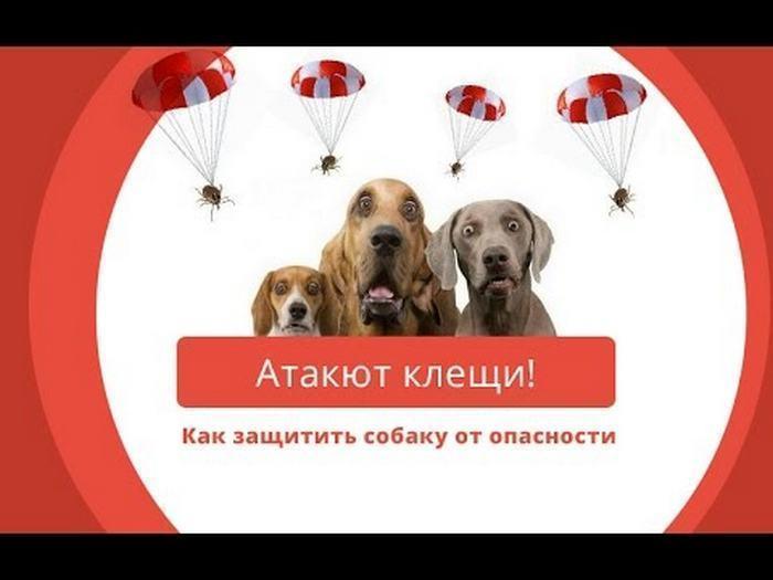 Как защитить собаку от пироплазмоза