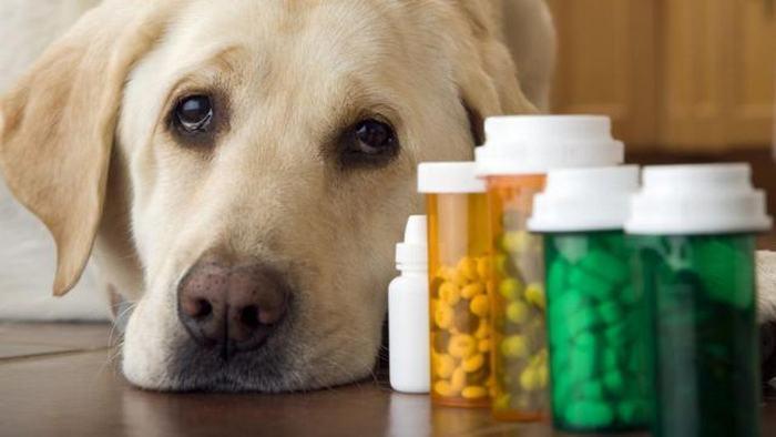 Лечение артроза у собак