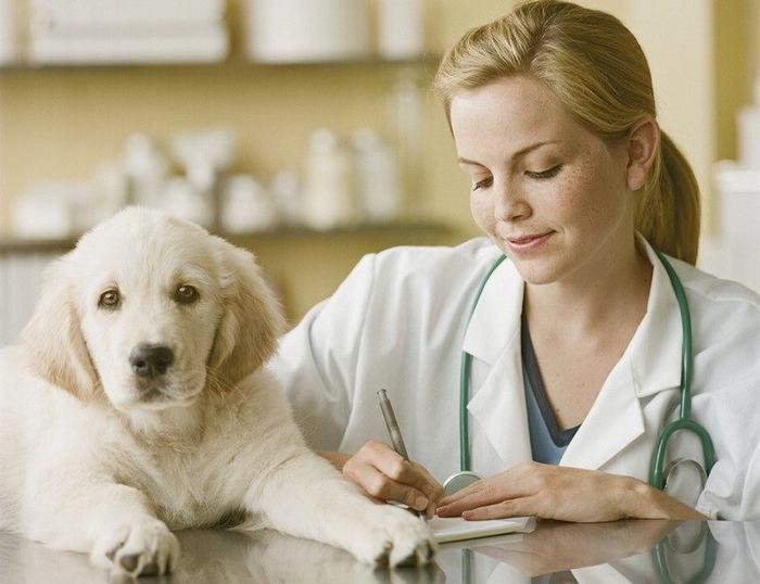 Везем собаку к ветеринару