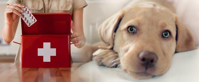 Заболевания селезенки у собак