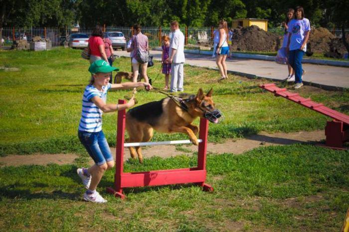 Правила поведения на площадке для выгула и дрессировке