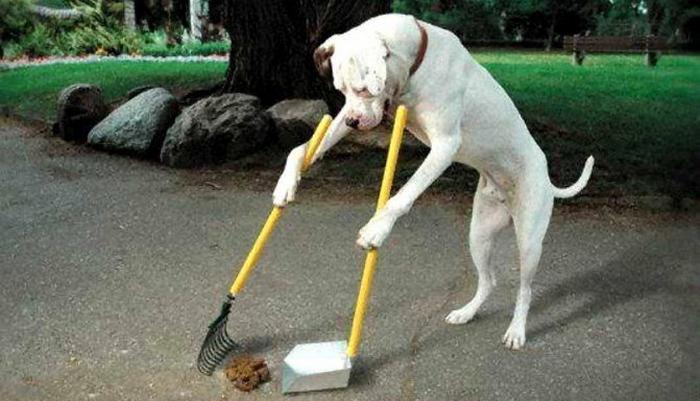 Почему нужно убирать за собакой