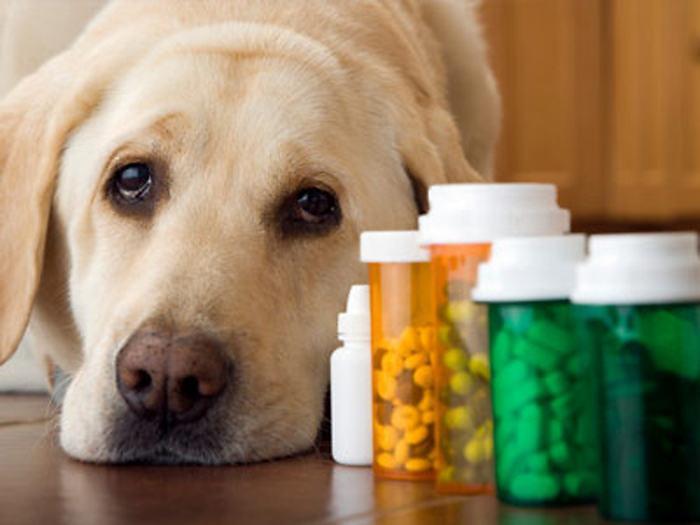 Лекарства для лечения гастрита у собак