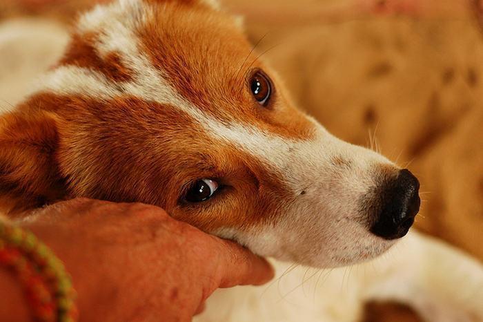 Собака с любящим хозяином