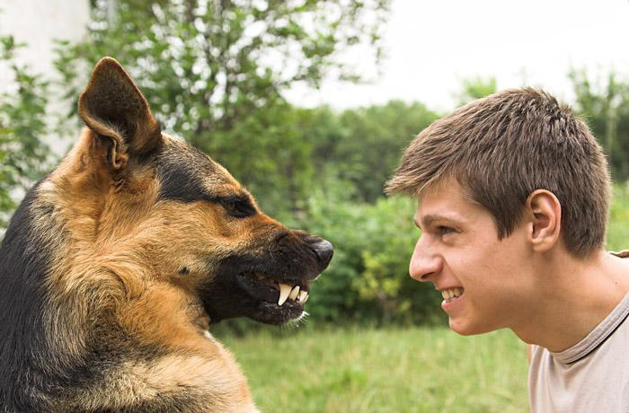 Как себя вести с агрессивной собакой