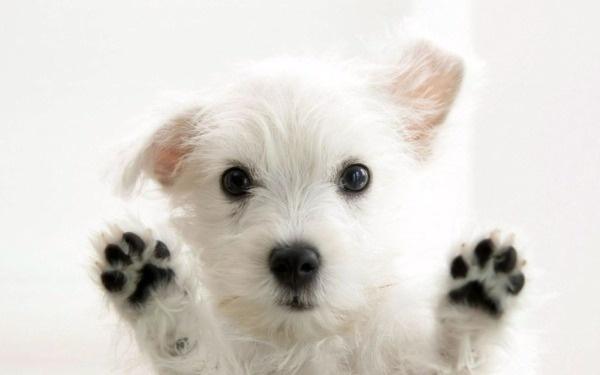 Грустная собака за стеклом