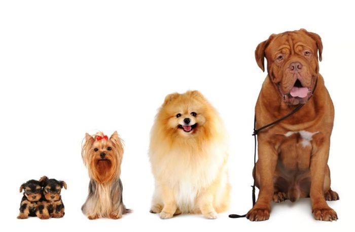 Разные собаки - от маленькой до большой