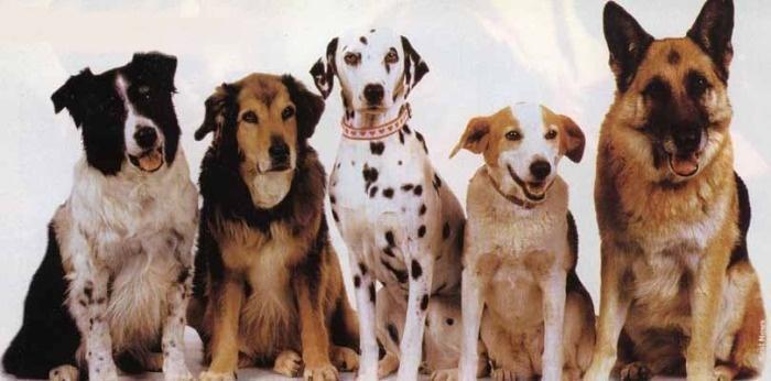 Большие собаки разных пород