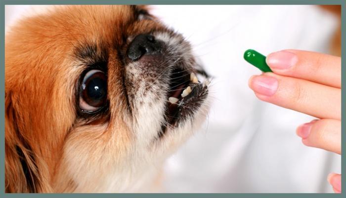 Собаке дают витамины