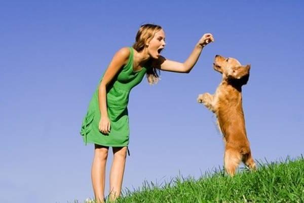 Поощрение щенка