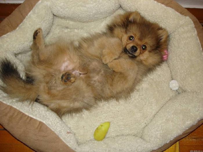 Лежанка для щенка