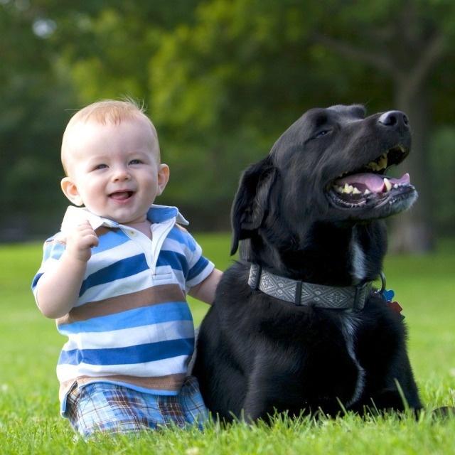 собака и мальчик