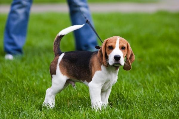 прогулка со щенком