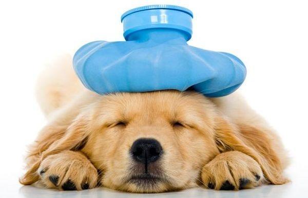 грелка со льдом на собаке