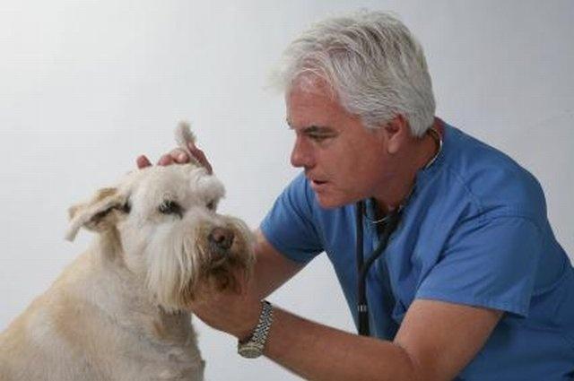 У ветеринара