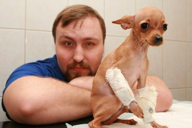 Собака с переломами у ветеринара