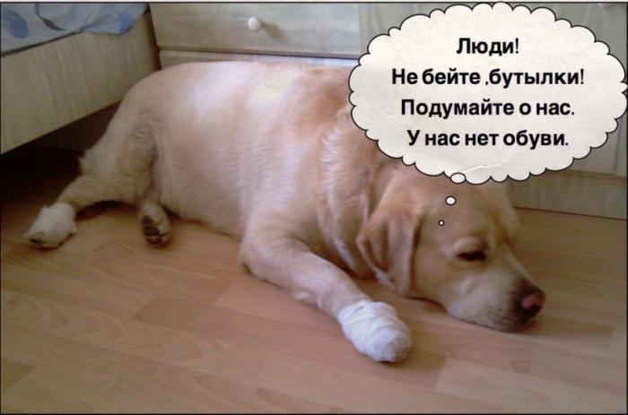 если б собака могла говорить