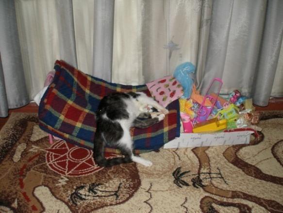 котик Кузя спит