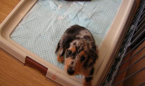 Маленькая собачка в лотке