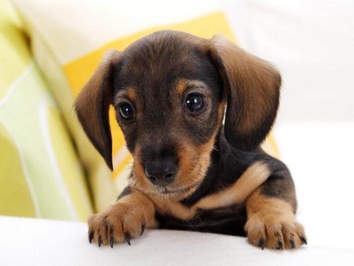 Бодрый щенок