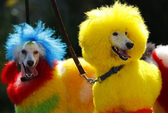 радужные собаки