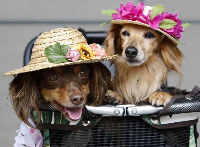 любители шляпок
