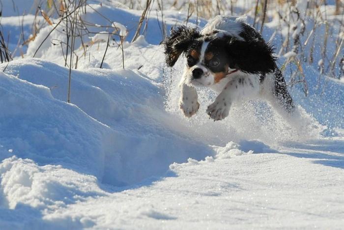 летящий над снегом