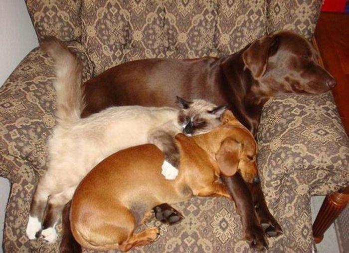 спящая троица