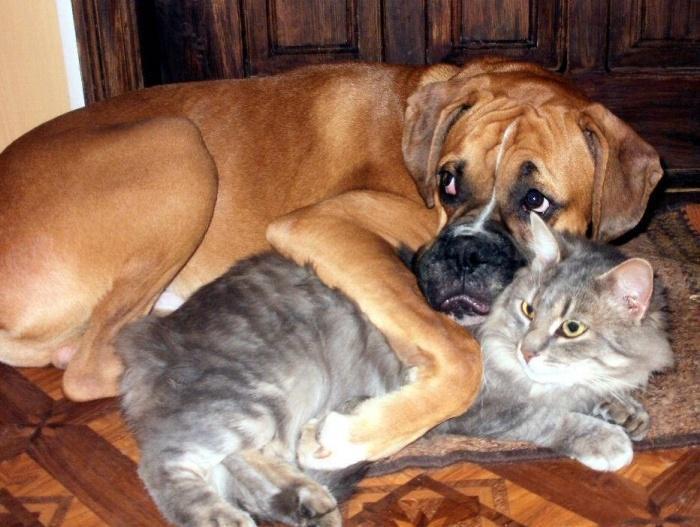 неразлучные друзья