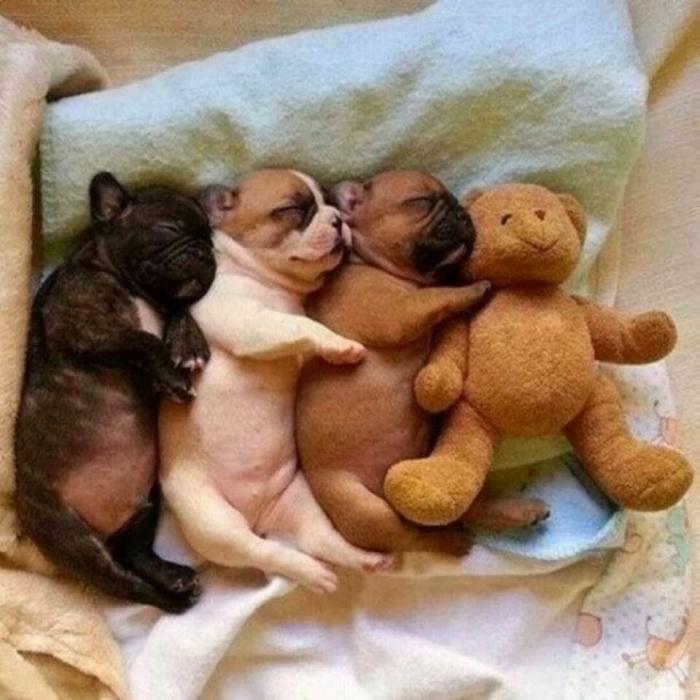 спящие щенятки