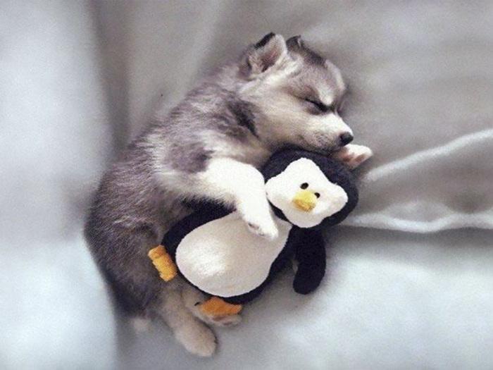 щенок с пингвином