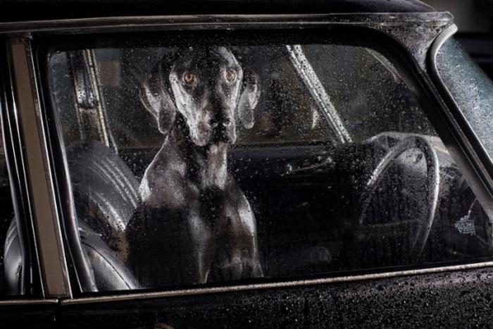 Доездился! И дождь идет и бензин закончился!