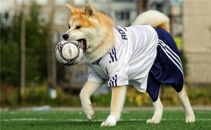 Футбол. Добавочное время