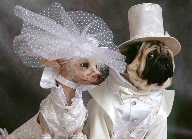 Классическая английская свадьба!