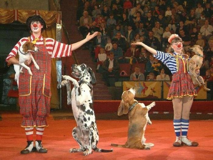 Всегда удивляешься способностям собак в цирке!