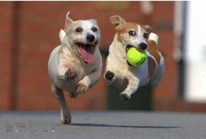 А это мы помогаем хозяйке в большой теннис играть - мячики подаем!