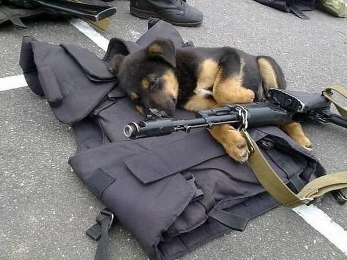 героическая собака
