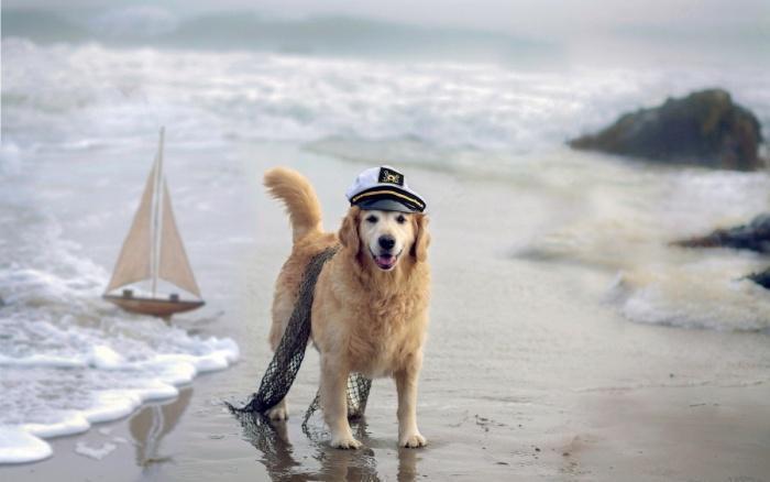 я отважный капитан