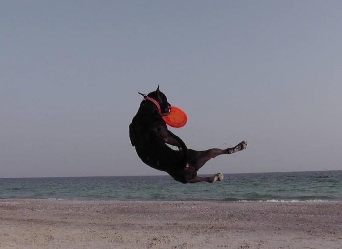 фризби, море и собака