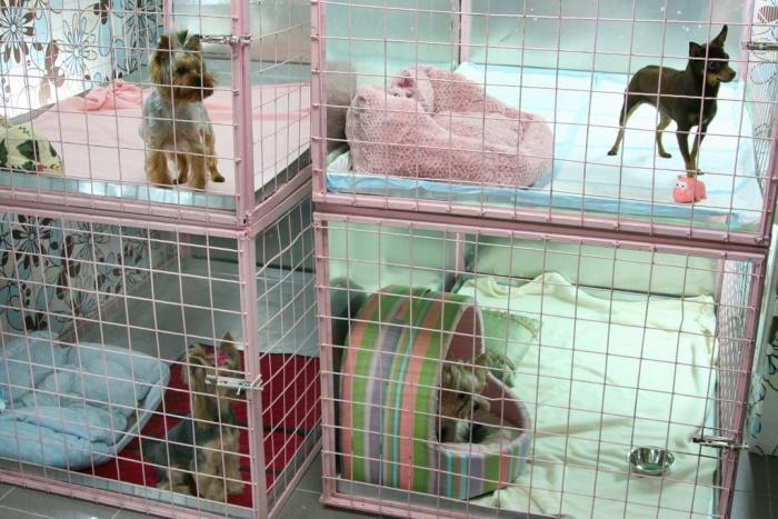 отель для мелких собачек