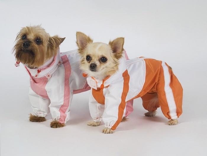 собаки в курточках