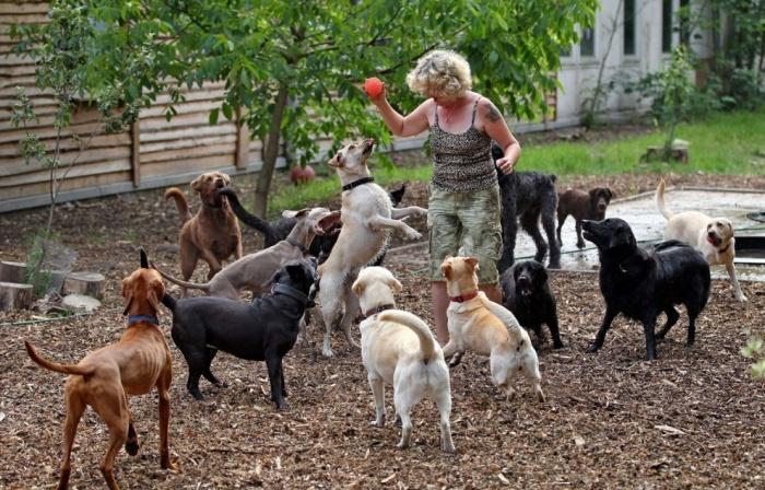 детский сад для собак в Берлине