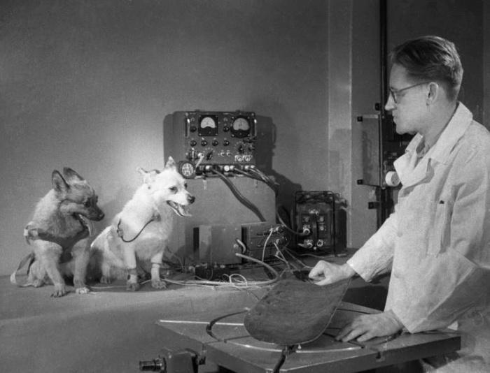 собаки Альбина и Малышка на тренировках