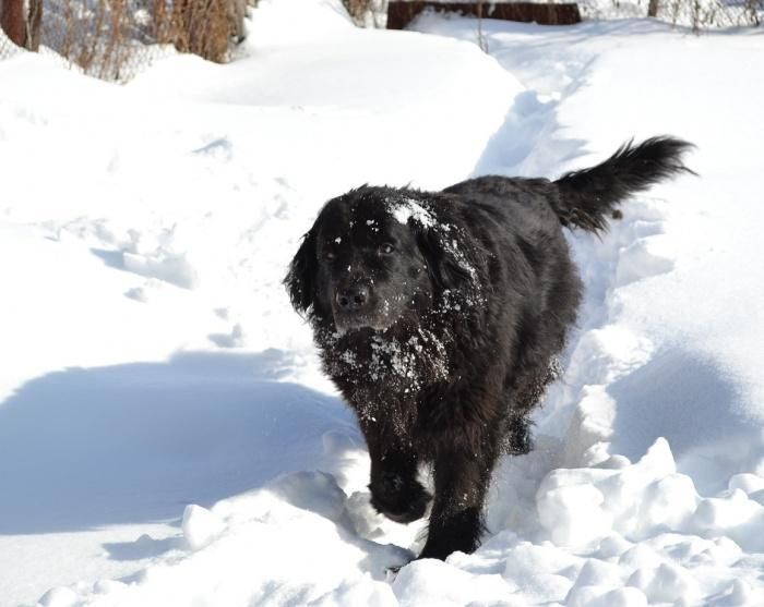 собака на зимней прогулке